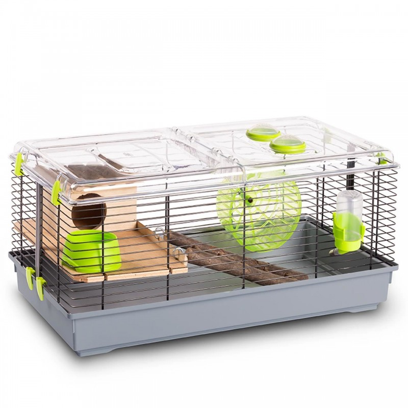 Cusca Hamsteri Trudy Natura