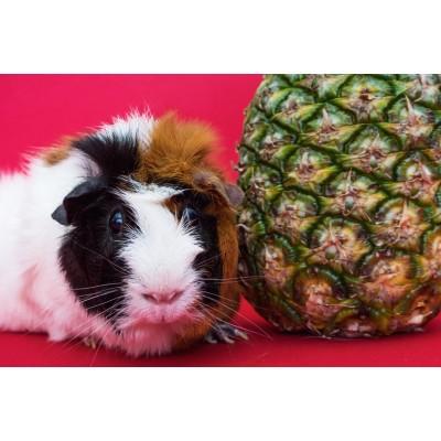 Produse Pentru Hamsteri
